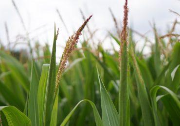 Charakterystyka kredytu pod zastaw ziemi rolnej. Co warto wiedzieć?